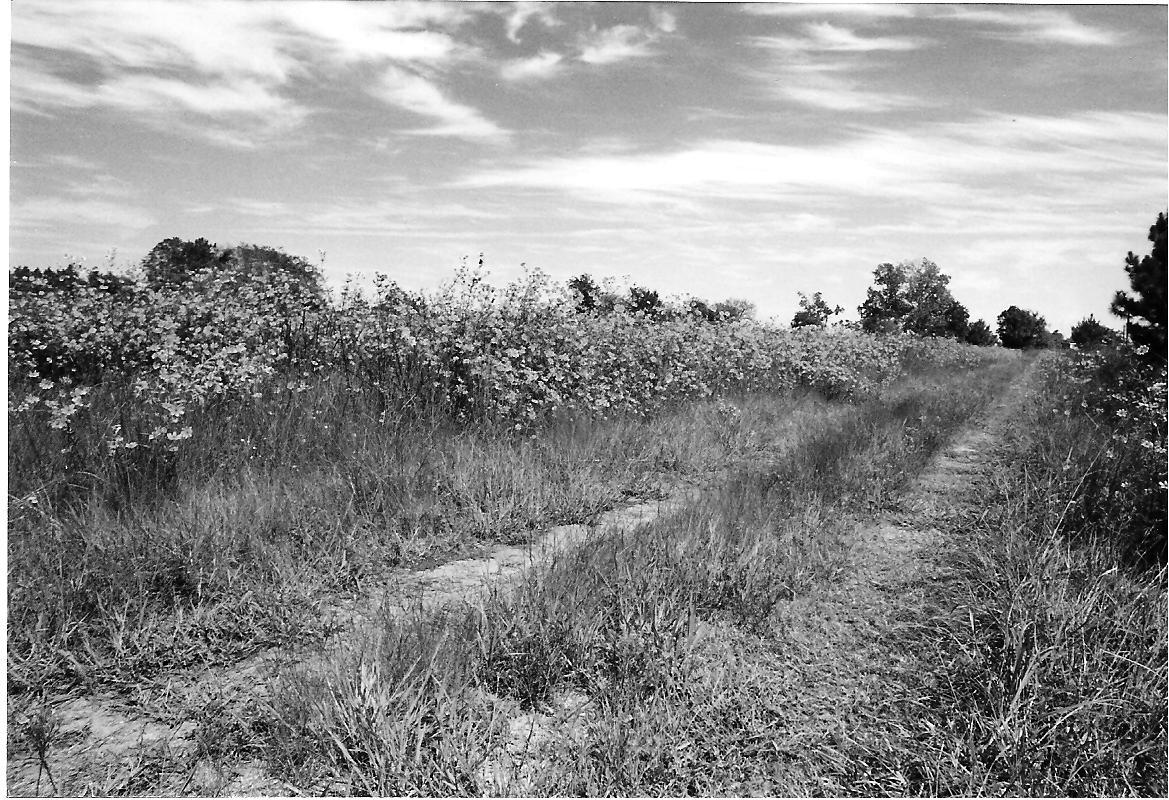 Unknown lane